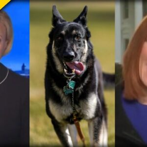 AWKWARD! Jen Psaki Forced to Come Up with Excuse for Biden's Aggressive Dog Major