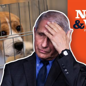 WHAT!? Did Fauci REALLY Fund Cruel Experiments on DOGS?   The News & Why It Matters   Ep 891